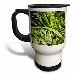 3dRose Alexis Photography - Nature Grass - Mix of green gras