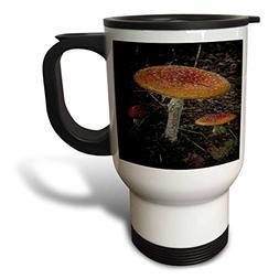 3dRose tm_154805_1 Three Orange Red Mushrooms Growing in The